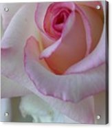With A Dash Of Pink Acrylic Print