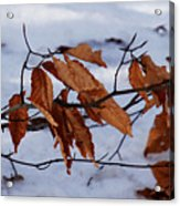 With Autumn's Passing Acrylic Print