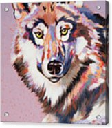 With Intent Acrylic Print by Bob Coonts