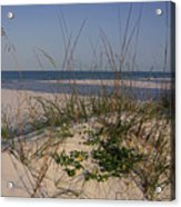 Withering Dunes Acrylic Print