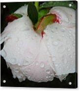 Without Umbrella Acrylic Print