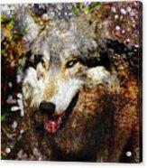 Wolf Art Version 8 Acrylic Print