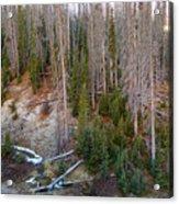 Wolf Creek Pass Forest Landscape Acrylic Print