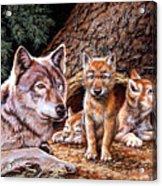 Wolf Den Acrylic Print