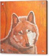 Wolf Home Burning Acrylic Print