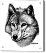 Wolf In Pencil Acrylic Print