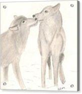 Wolf Lovers Acrylic Print
