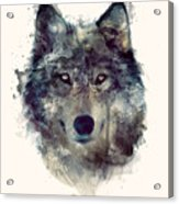 Wolf // Persevere Acrylic Print