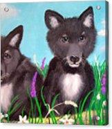 Wolf Pups Acrylic Print