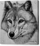 Wolf Sketch Acrylic Print