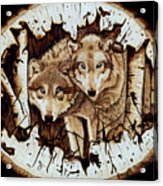 Wolves In Hiding Acrylic Print