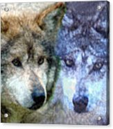 Wolves Acrylic Print