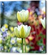 Photographer Behind The Flowers Acrylic Print