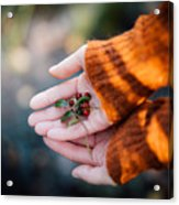Woman Hands Holding Cranberries Acrylic Print