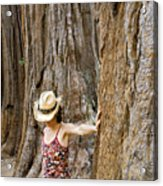Woman Leaning On Giant Sequoia Tree Acrylic Print