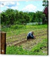 Woman Planting Garden Near Barn Acrylic Print