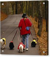 Woman Walks Her Army Of Dogs Dressed Acrylic Print