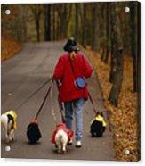 Woman Walks Her Army Of Dogs Dressed Acrylic Print by Raymond Gehman