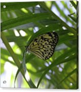 Wonderful Look At A Tree Nymph Butterfly In Foliage Acrylic Print