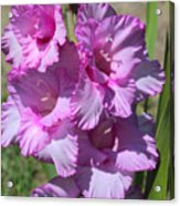 Wonderful Pink Gladiolus Acrylic Print