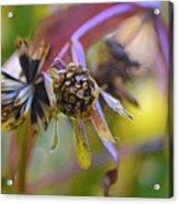 Wonderful Weeds Acrylic Print