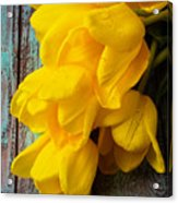 Wonderful Yellow Tulips With Dew Acrylic Print