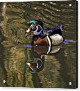 Wood Duck Autumn Reflections Acrylic Print