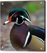 Wood Duck Acrylic Print