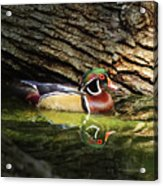 Wood Duck In Wood Acrylic Print