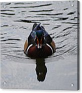 Wood Duck Male 20130924_268 Acrylic Print