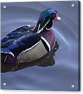 Wood Duck On The Delaware - 06 Acrylic Print