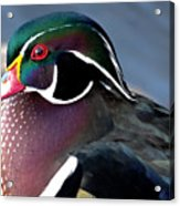 Wood Duck On The Delaware - 27fullsizerender Acrylic Print