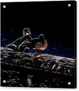 Wood Duck Pair - Fractal Acrylic Print