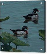 Wood Ducks On Lake Morton Acrylic Print