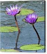 Wood Enhanced Water Lilies Acrylic Print