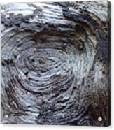 Wood Grain Of Buena Vista  Acrylic Print
