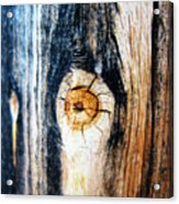 Wood In Macro #1 Acrylic Print