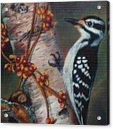 Wood Pecker Acrylic Print