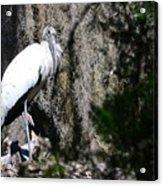Wood Stork And Moss Acrylic Print