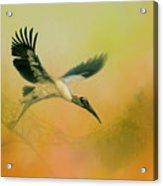 Wood Stork Encounter Acrylic Print