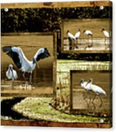 Wood Storks Of Oak Grove Island Acrylic Print