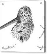 Woodcock With Foot Acrylic Print