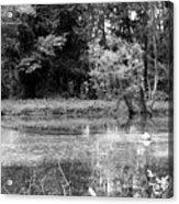Wooded Pond Acrylic Print