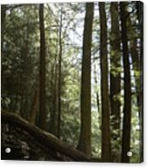 Wooded Serenity Acrylic Print