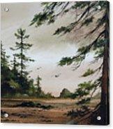 Wooded Shore Acrylic Print