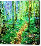 Wooded Trail Acrylic Print
