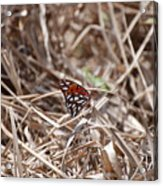 Wooden Butterfly Acrylic Print