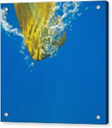 Wooden Paddle Underwater Acrylic Print