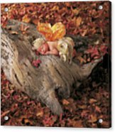 Woodland Fairy Acrylic Print by Anne Geddes