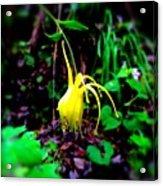 Woodland Flower Acrylic Print